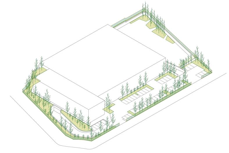 Bosque medicinal_proceso